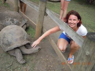 Alte und bissige Schildkröte