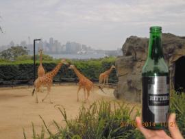 2014 10 27 Australien Sydney Taronga Zoo