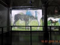 Videofilm im Gebäude Rossstall