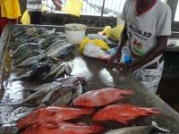 2016 10 28 Markt mit frischen Fischen