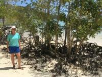 2016 11 02 Schildkröteninsel Curieuse_Mangroven