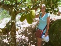 2016 11 06 Botanischer Garten Jardin du Roi mit interessanten Früchten