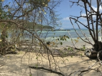 2016 11 02 Schildkröteninsel Curieuse Spaziergang durch Mangrovenwälder