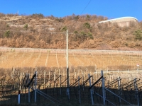 Weingärten am Ritten in St Magdalena