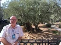 2016 11 21 Jerusalem Garten Gethsemane Olivenbäume