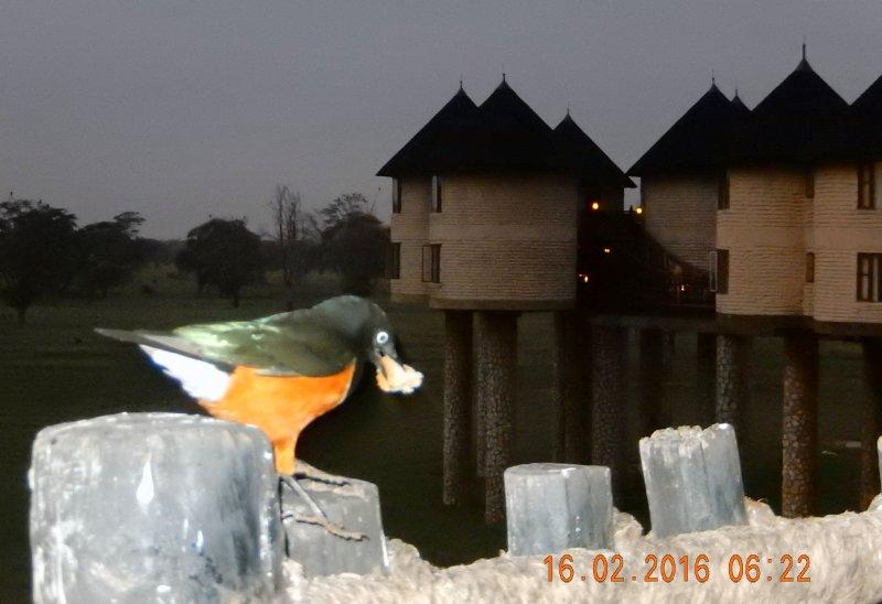 2016 02 16 Safari_der frühe Vogel fängt das Brot