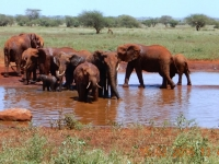 2016 02 15 Safari_Elefanten beim Wasser_einfach imposant