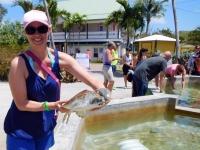 2017 03 27 Grand Cayman Schildkrötenfarm mit Aufzucht