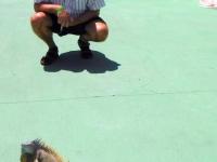 2017 03 27 Grand Cayman Schildkrötenfarm mit Leguan