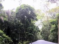 2017 03 25 Costa Rica Zugfahrt durch Dschungel