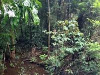 2017 03 25 Costa Rica Zugfahrt durch den Dschungel