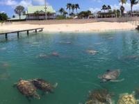 2017 03 27 Grand Cayman Schildkrötenfarm