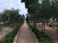 2017 06 11 Tropea Garten auf Insel Santa Maria