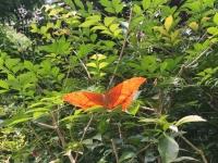 2017 11 03 Wunderschöne Schmetterline