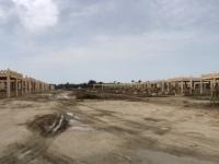 2017 02 15 Bahrain Kamelfarm mit hunderten Dromedaren
