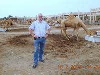 2017 02 15 Bahrain Kamelfarm vom Bruder des Scheichs