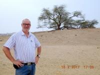 2017 02 15 Bahrain Lebensbaum ohne Wasserquelle mitten in der Wüste
