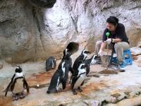 2017 02 18 Pinguinfütterung