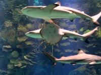Rochen und Haie