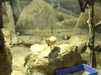 Wüstenlandschaft mit vielen Tieren