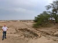 2017 02 15 Bahrain Lebensbaum mitten in der Wüste Kunstfoto