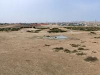 2017 02 15 Bahrain Vom Lebensbaum Blick in die Wüste