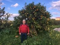 2018 02 25 Alsancak Orangenbäume