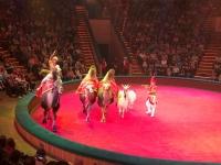 2018 06 27 Minsk Zirkusvorstellung interessante Tierevorführung