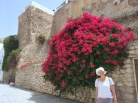 2018 07 13 Ibiza Blumenpracht
