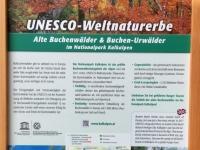 Österreich Alte Buchenwälder der Karpaten Plakat 1