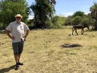 2018 10 24 Maun Sedia Riverside Lodge rechts ist der Esel