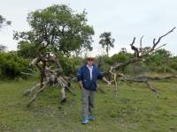 2018 10 26 Okawango Delta interessanter Baum
