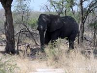 2018 10 27 Fotostopp wegen Elefant
