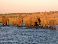 2018 10 28 Chobe Nationalpark Bootsfahrt Elefantenwanderung