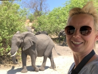 2018 10 28 Chobe Nationalpark Elefanten kommen aus dem Busch
