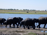 2018 10 28 Chobe Nationalpark_dann gehts wieder zurück ins Wasser