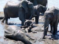 2018 10 28 Chobe Nationalpark_das macht Spaß