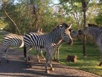 2018 10 31 Livingstone Maramba Lodge Fahrt zum Devils Pool