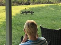 2018 11 01 Affenfamilie vor unserer Terrasse