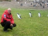 2019 03 06 Grave Cove Kolonie Rockhoppers Pinguine neugierig