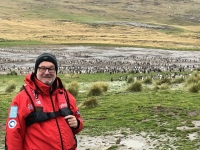 2019 03 06 Grave Cove Kolonie Rockhoppers Pinguine