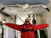 2019 03 10 Grytviken Museum_einer der größten Albatrosse der Welt