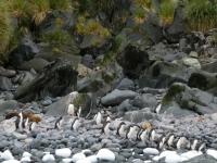 2019 03 11 Cooper Bay Pinguinkolonie