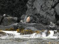 2019 03 15 Gough Island Tierwelt