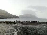 2019 03 06 Grave Cove Kolonien Rockhoppers Pinguine und Menschen
