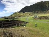 2019 03 16 Tristan da Cunha Erdäpfelplantage 1