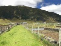 2019 03 16 Tristan da Cunha Erdäpfelplantage 2