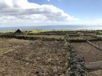 2019 03 16 Tristan da Cunha Erdäpfelplantage 3