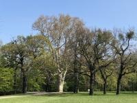 Tolle Bäume im Schlossgarten