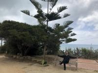 2019 05 28 Selinunte interessante Bäume